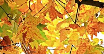 autumn-1655915_960_720